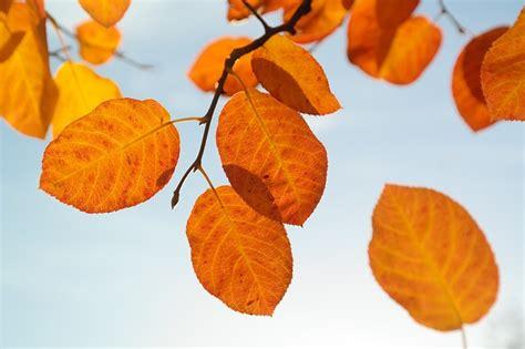 Herbst Garten Winterfest Machen by Herbst B 228 Ume Und Pflanzen Auf Den Winter Vorbereiten