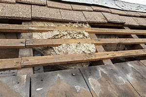Wespen Unter Dachziegel : wespennest unter dem dach umsiedlung und entfernung f r 2018 ~ Articles-book.com Haus und Dekorationen