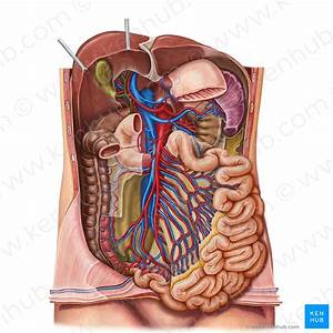 Small Intestine  Blood Supply And Innervation