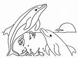 Dolphin Coloring Printable Dolphins Realistic Prints Jumping Sea sketch template