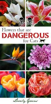 flowers poisonous to cats lovely greens edible gardening handmade diy