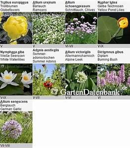 Winterharte Pflanzen Liste : winterharte balkonpflanzen liste 5 beispiele f r ~ Michelbontemps.com Haus und Dekorationen