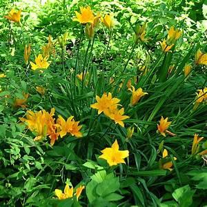 Plantes Exotiques Rustiques : plantes rustiques vivaces pivoine etc ~ Melissatoandfro.com Idées de Décoration