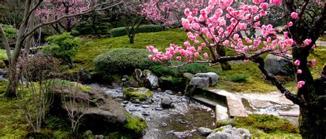 Japanese Cherry Blossom Gardens  Garden Inspiration