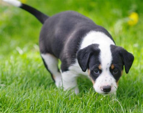 Racas De Cachorro Que Mais Gostam De Brincar Tudo