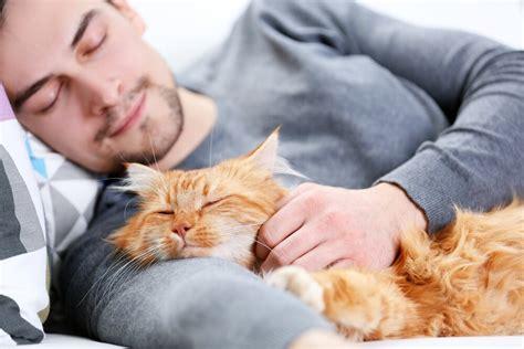 Kāpēc kaķi guļ kopā ar saimniekiem - Eizklaide
