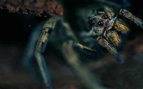Animated Spider Wallpaper - spider world animated wallpaper desktopanimated