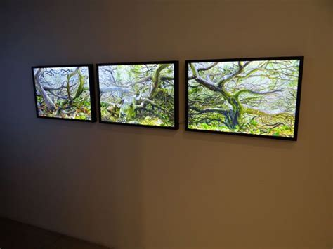 chris doyle wall lightbox leaf wall