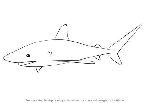learn   draw  bull shark fishes step  step