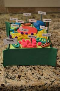 Reed U0026 39 S 7th Grade Advanced Science Plant Cell Project 3