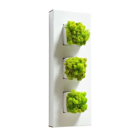 plante verte bureau plante verte exterieur sans entretien photos de