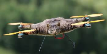 cat quadcopter bart jansen who turned dead cat into drone plans to create