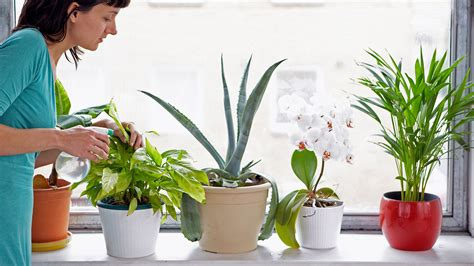 grow ls for indoor plants plants that you can grow indoor and their benefits