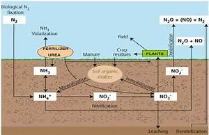 Nitrogen Cycle In Soils