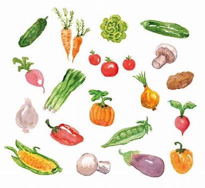 Watercolor Vegetables Vegetable Clip Clipart Printable Cliparts