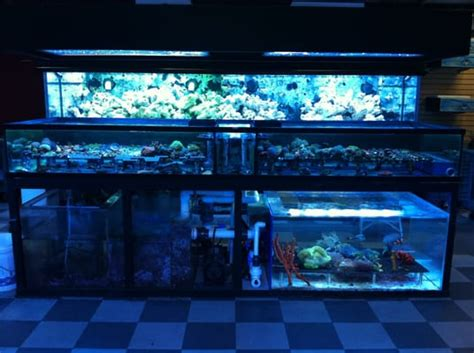aquarium fish los angeles custom aquariums and saltwater fish los angeles 2017 fish