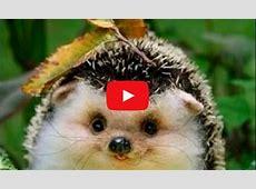 Video Tierbabys und andere süße Tiere