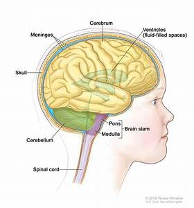 Childhood Brain Stem Glioma Treatment