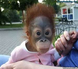 Funny Animals: Cute Funny Monkey Pictures