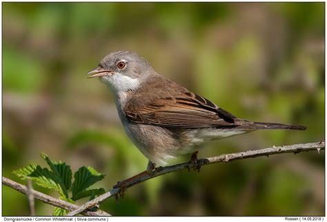 songbirds  digital nature photography photo