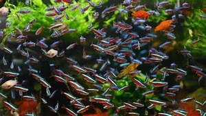 Tiere Für Aquarium : so klappt es mit dem ersten aquarium tiere ~ Lizthompson.info Haus und Dekorationen