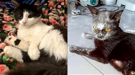 Smieklīgi kaķi ir visur - Spoki