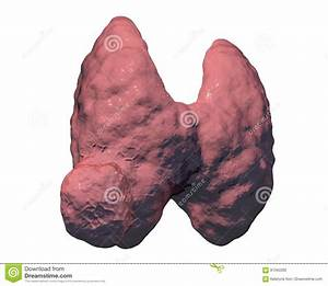Thyroid Gland Cancer Stock Illustration  Illustration Of