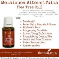 Young Living Tea Tree Oil Images