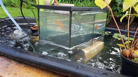 les poissons vont et viennent du bassin 224 l aquarium