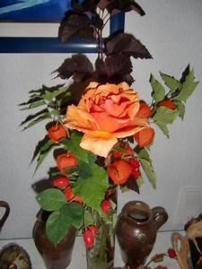 Welche Bäume Blühen Jetzt : welche rosensorten bl hen jetzt noch im september page 2 mein sch ner garten forum ~ Buech-reservation.com Haus und Dekorationen