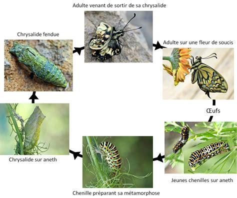 la pollinisation menac 233 e vigie nature 201 cole