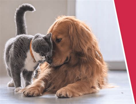 Last updated january 13, 2021. Pet Insurance | Pet Insurance Quotes | Argos Pet Insurance