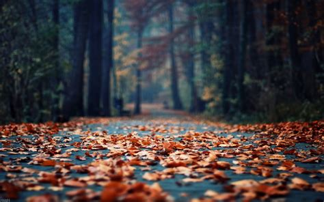 71+ Fall Backgrounds Tumblr ·① Download Free Cool Hd