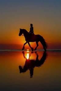 Best 25+ Horses ideas on Pinterest | Pretty horses, Horse ...