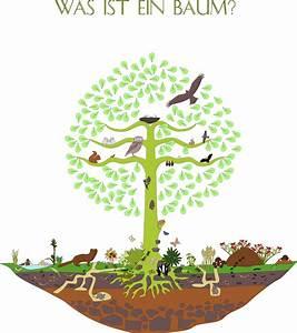 Was Ist Das Für Ein Baum : lebensraum baum themenseite des bund naturschutz ~ Watch28wear.com Haus und Dekorationen