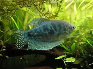Co2 Bläschen Berechnen : blauer fadenfisch aqua ~ Themetempest.com Abrechnung