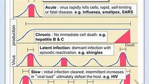 Patterns Of Viral Infections