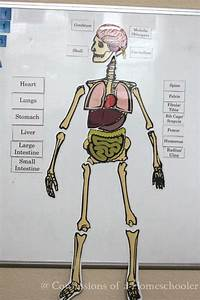 Life Size Human Anatomy Activity