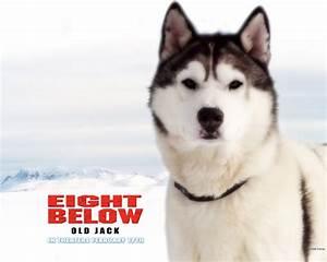 SheepS!: Eight below-old jack