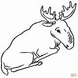 Moose Coloring Pages Sitting Bull Drawing Printable Alaska Getdrawings Adults Cif Paper Supercoloring Printables Dot Deer Categories sketch template