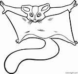 Glider Gliders Coloringall Mammals sketch template