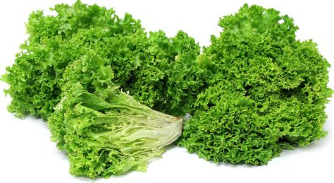 jumbo mustard lollo verde lettuce information recipes and facts