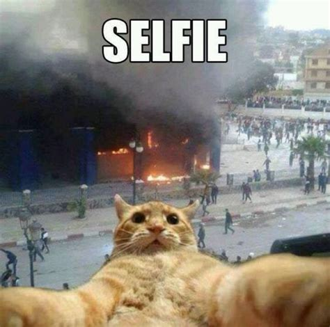 Selfie Meme Funny - haha cat taking a selfie with burning building in background humor animal pinterest what
