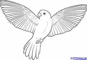 Flying Bird Drawing Free Download Clip Art Free Clip