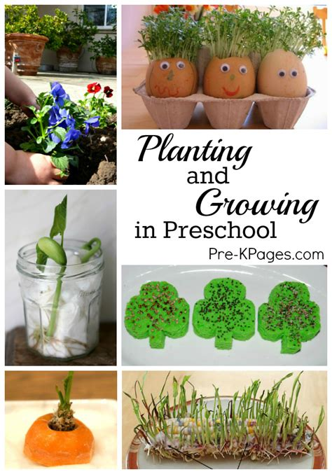 science for planting and growing in preschool pre