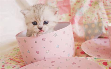 可爱猫咪高清壁纸下载 可爱小奶猫桌面壁纸 - 系统天堂