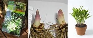 Quand Planter Le Muguet : comment planter bulbe muguet ~ Melissatoandfro.com Idées de Décoration