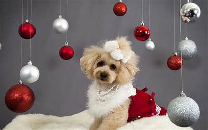 Christmas Dogs Wallpapers