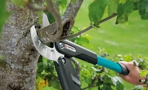 Apfelbaum Schneiden Sommer : die besten 25 obstb ume schneiden ideen auf pinterest ~ Lizthompson.info Haus und Dekorationen