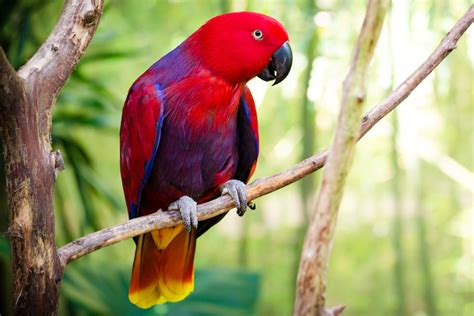 wings the bird park places to see in hyderabad ramoji